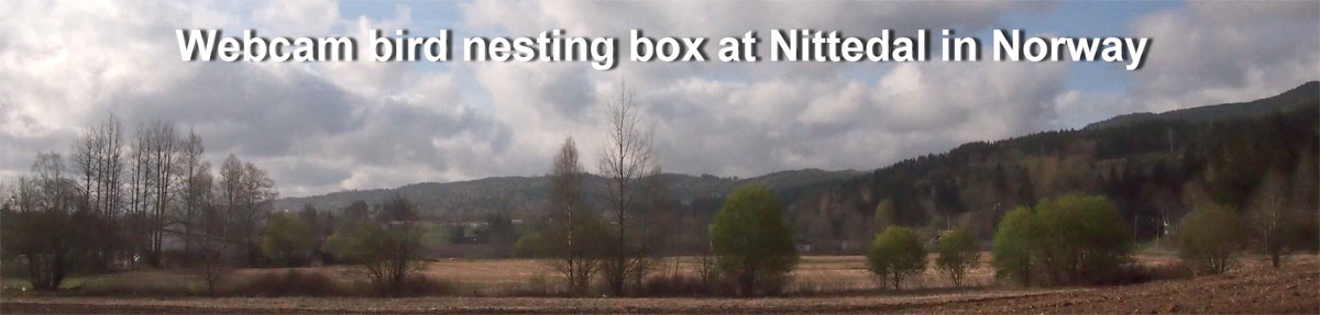 Webcam bird nesting box in Nittedal Norway